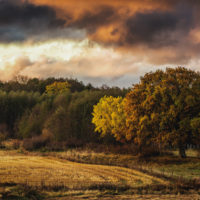 Swedish Autumn Landscapes