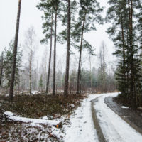 Swedish Winter Landscapes